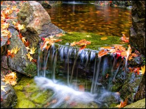 Japanese-Garden-in-Victoria-British-Columbia-autumn-leaves-at-Butchart-Gardens