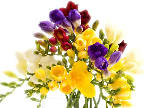 Fericirea este ca parfumul florilor...