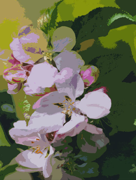 Copy of 04_Apple blossom