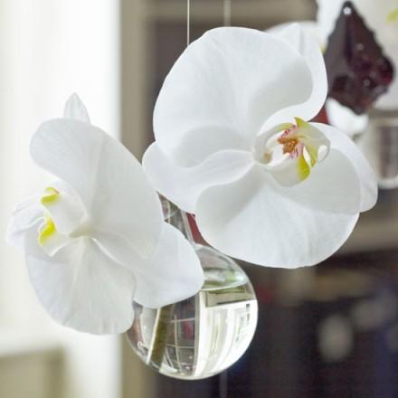 Copy of flowers2