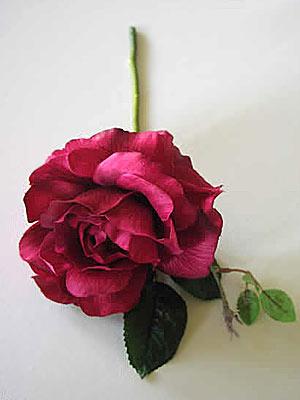roseshortstemmeddeepcerise