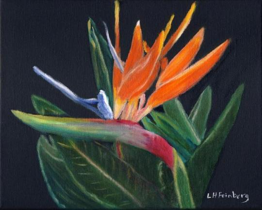bird-of-paradise-in-oil-linda-feinberg