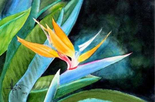 bird-of-paradise-phil-hilton