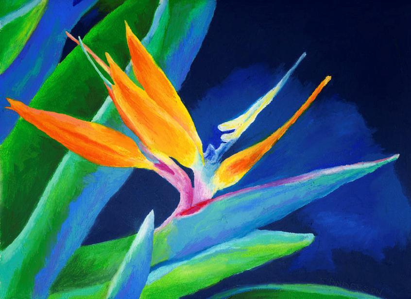 bird-of-paradise-stephen-anderson
