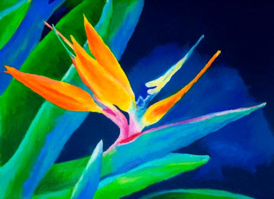 bird-of-paradise-stephen-anderson