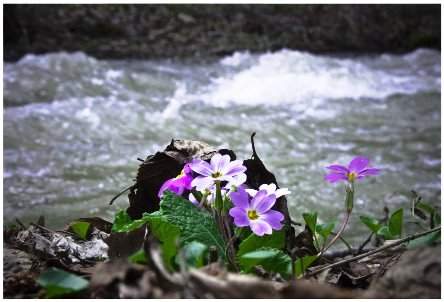 flower_and_river