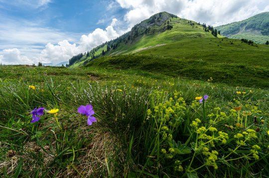 Alpii francezi