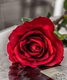 Assaf Frank  rose