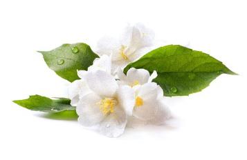 scent_1