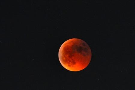 luna rosie