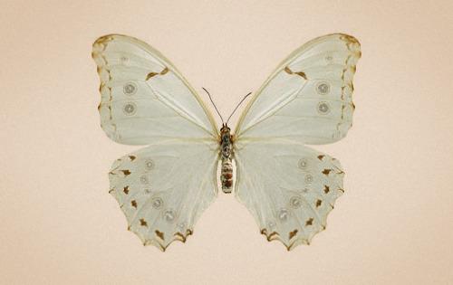 fluturi (1)