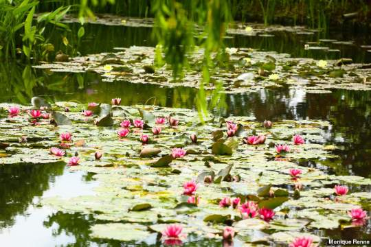 giverny-fundacao-claude-monet (1)