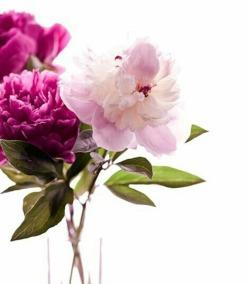 doar roz